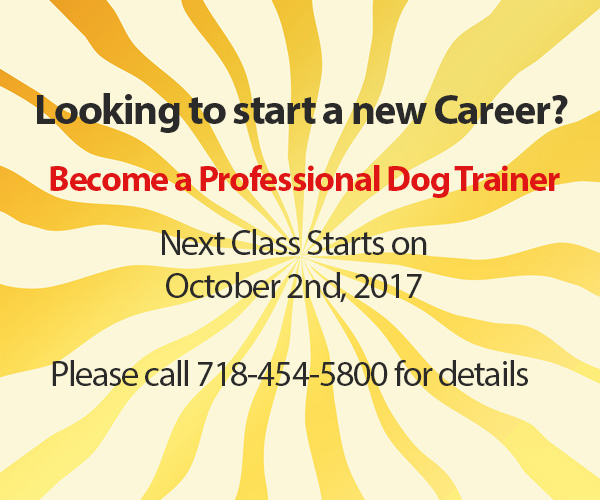 Start a new career, Dog School NY Anthony Jerone