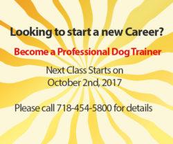 Start a new career, Dog School NY Anthony Jerone