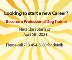 New Dog Training classes start on April 5th, 2021