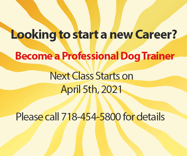 New Dog Training classes start on April 5th, 2021
